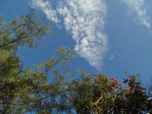 Cielo Serrano, Anunciando un hermoso Dia.
